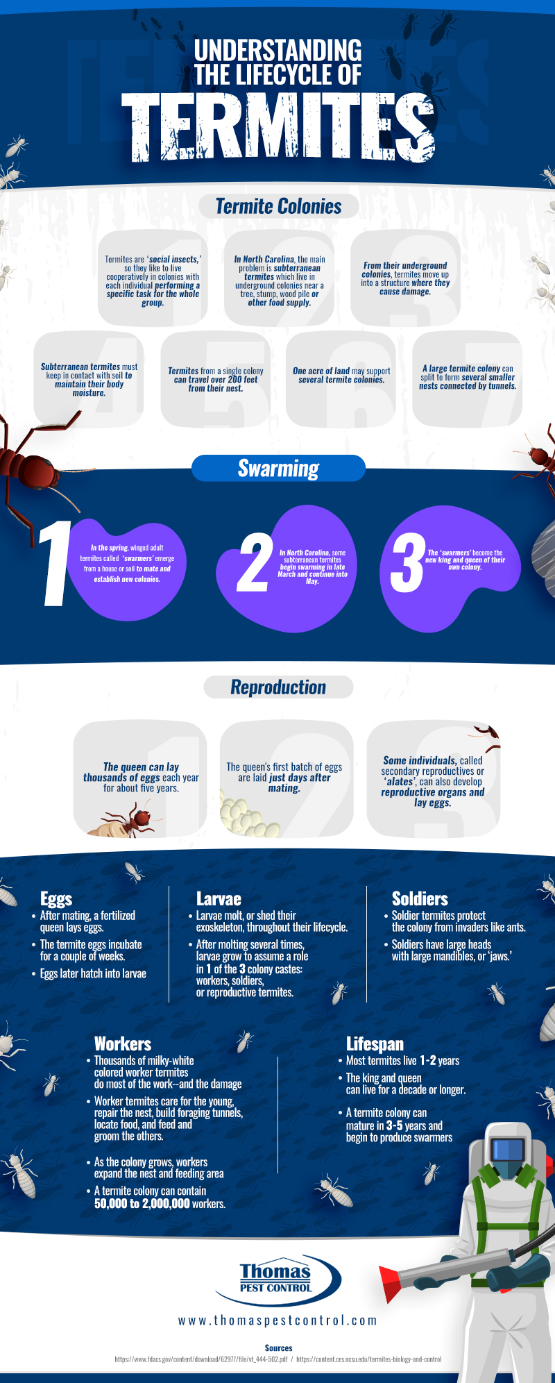 Understanding the Lifecycle of Termites-D5 (1)
