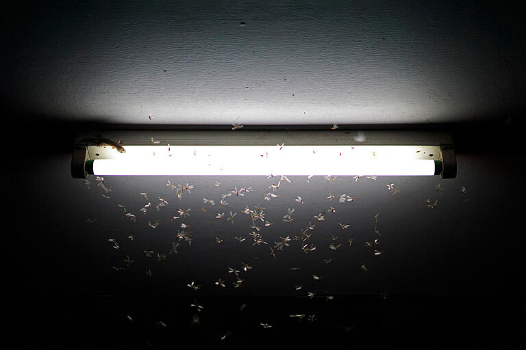 bugs-attracted-to-light